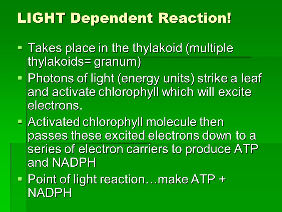  Cyclic Phosphorylation  Step 1) P700 (Photosystem 1) captures light and passes excited electrons down an ETC to make ATP…it's much simpler.