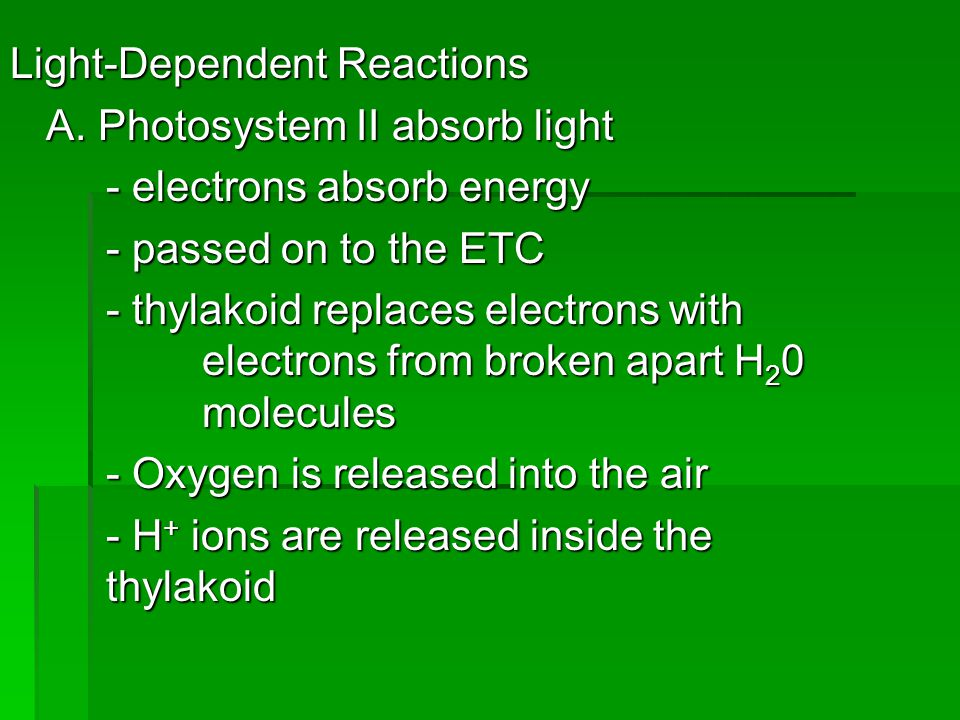 Light-Dependent Reactions A. Photosystem II absorb light - electrons absorb energy - passed on to the ETC - thylakoid replaces electrons with electron