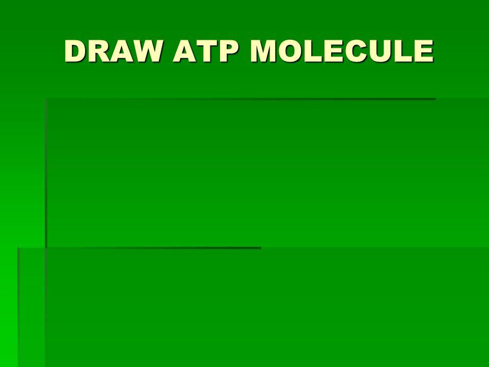DRAW ATP MOLECULE