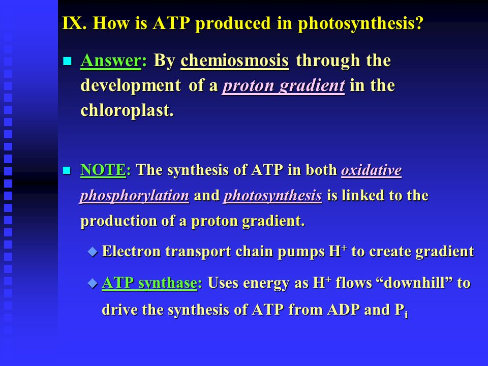 IX.How is ATP produced in photosynthesis.