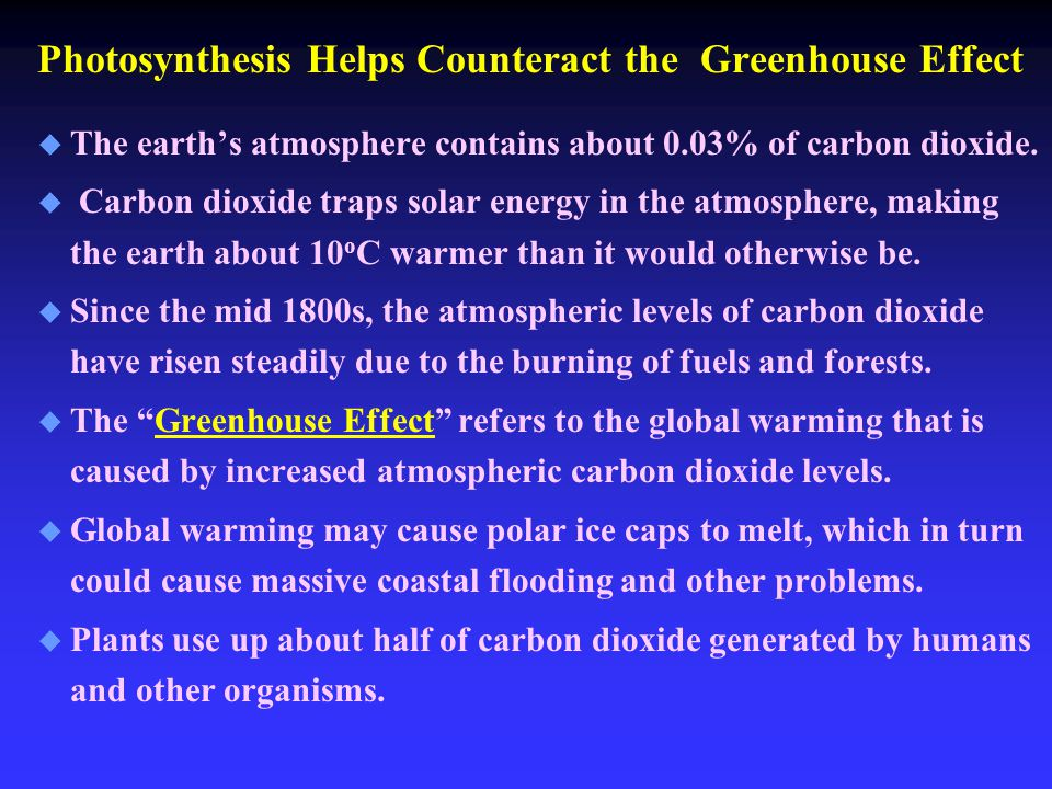 Photosynthesis Helps Counteract the Greenhouse Effect u u The earth's atmosphere contains about 0.03% of carbon dioxide.