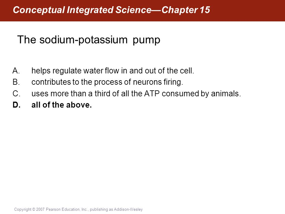 Copyright © 2007 Pearson Education, Inc., publishing as Addison-Wesley Conceptual Integrated Science—Chapter 15 The sodium-potassium pump A.helps regu