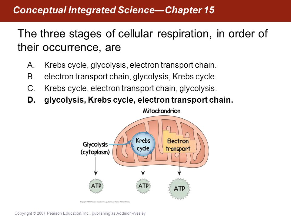 Copyright © 2007 Pearson Education, Inc., publishing as Addison-Wesley Conceptual Integrated Science—Chapter 15 The three stages of cellular respirati