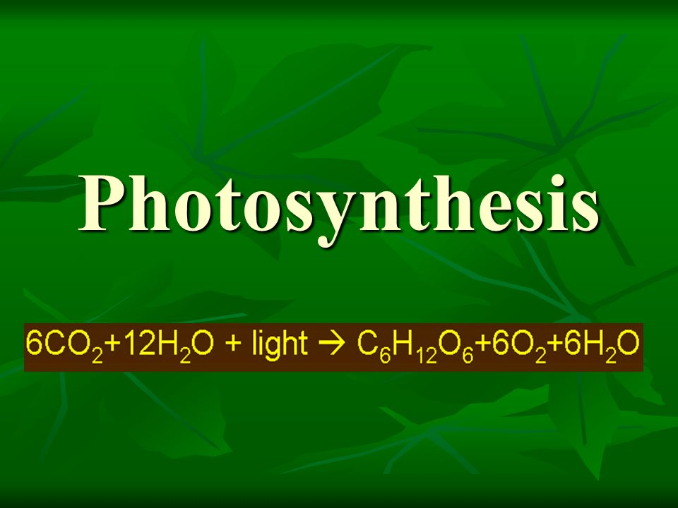 Leaf Structure and function The leaf is a sandwich of photosynthetic parenchyma between two layers of epidermis.