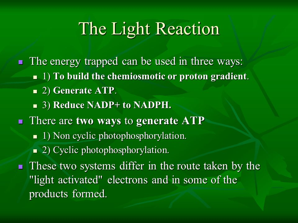 The Light Reaction The energy trapped can be used in three ways: The energy trapped can be used in three ways: 1) To build the chemiosmotic or proton