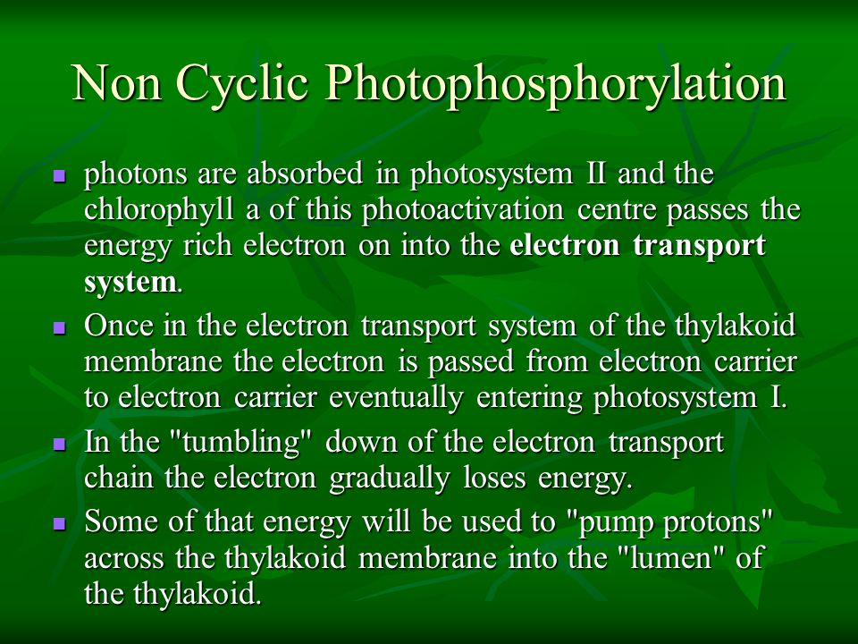 Non Cyclic Photophosphorylation photons are absorbed in photosystem II and the chlorophyll a of this photoactivation centre passes the energy rich ele