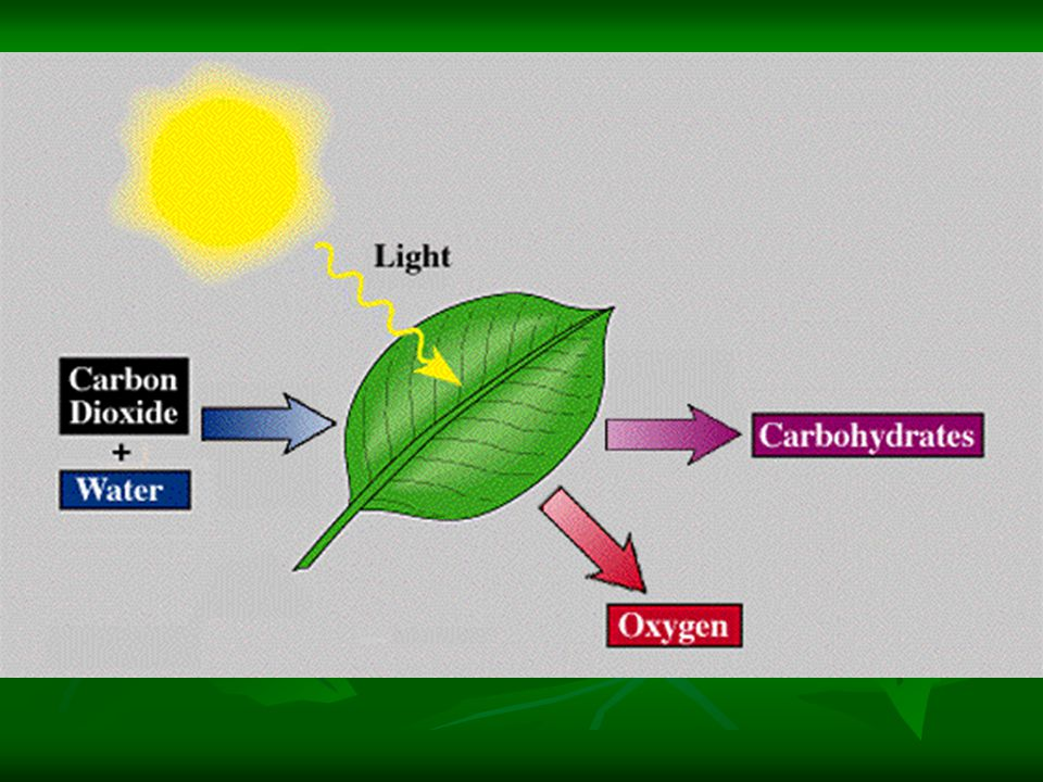 Introduction Photosynthesis transfers electrons from water to energy-poor CO2 molecules, forming energy-rich sugar molecules.