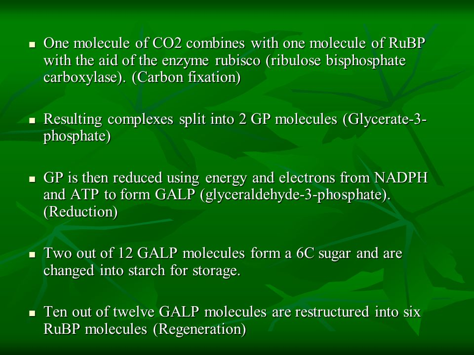 One molecule of CO2 combines with one molecule of RuBP with the aid of the enzyme rubisco (ribulose bisphosphate carboxylase). (Carbon fixation) One m