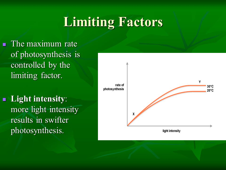 Limiting Factors The maximum rate of photosynthesis is controlled by the limiting factor. The maximum rate of photosynthesis is controlled by the limi