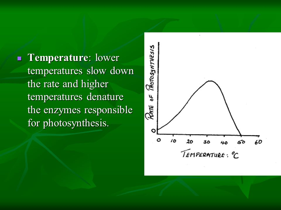 Temperature: lower temperatures slow down the rate and higher temperatures denature the enzymes responsible for photosynthesis. Temperature: lower tem
