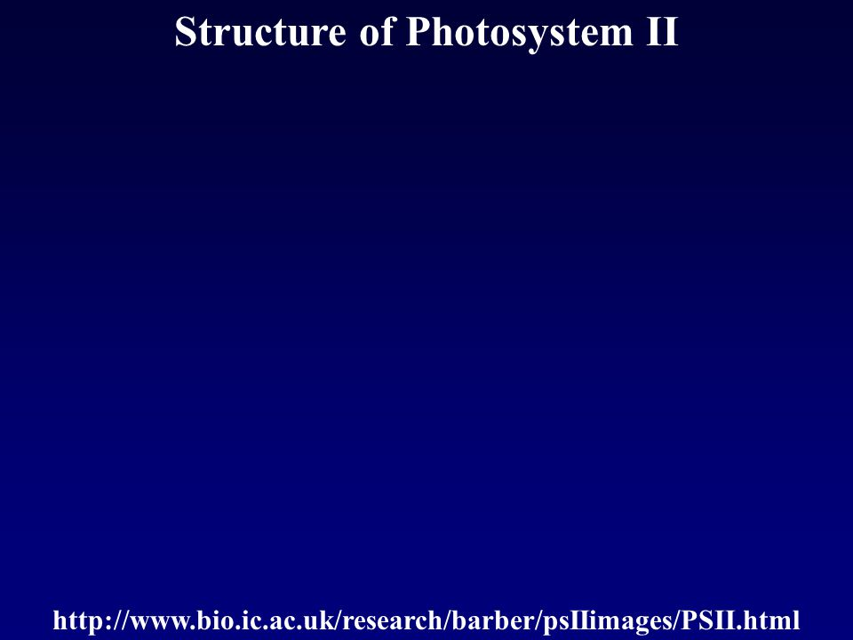 Structure of Photosystem II http://www.bio.ic.ac.uk/research/barber/psIIimages/PSII.html