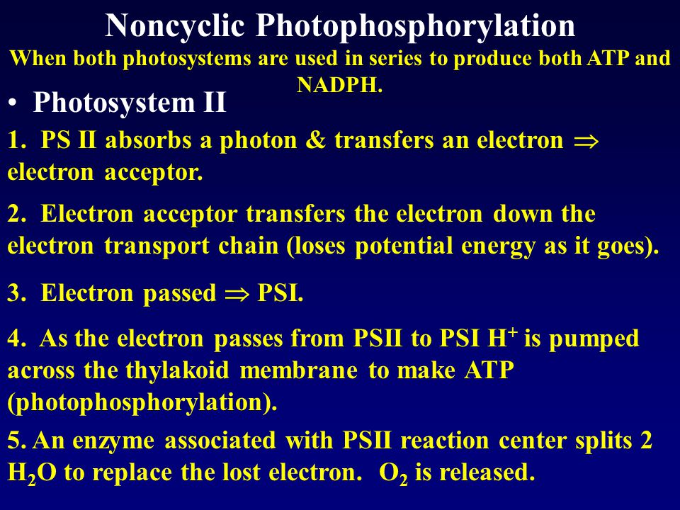 When both photosystems are used in series to produce both ATP and NADPH.