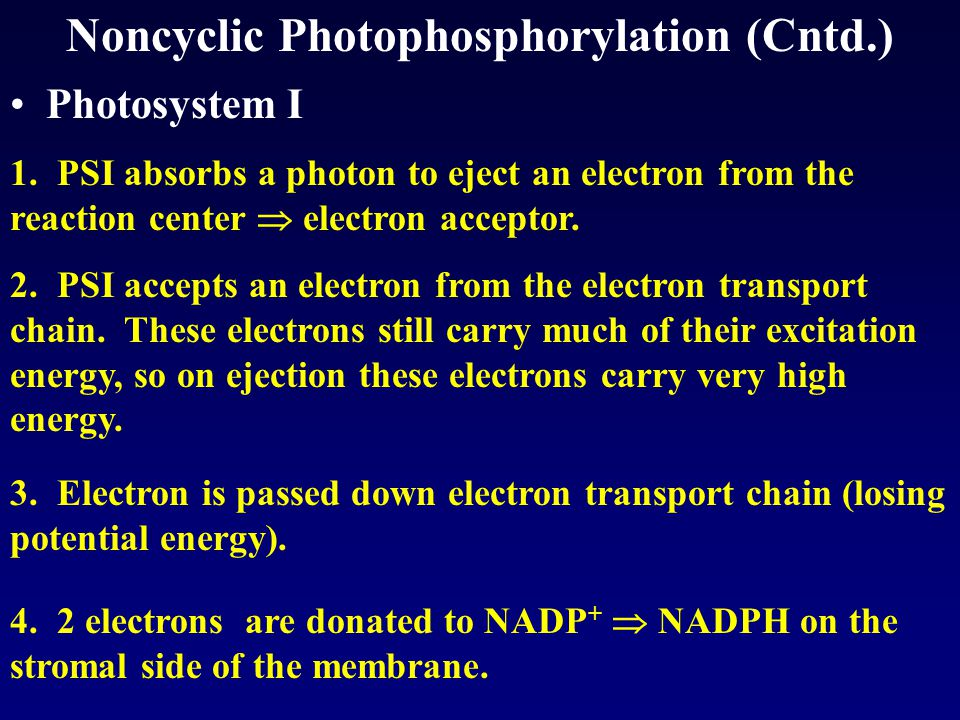 Noncyclic Photophosphorylation (Cntd.) Photosystem I 1.