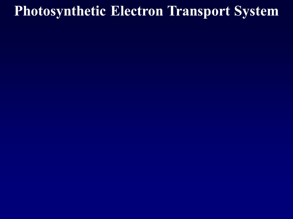 Photosynthetic Electron Transport System
