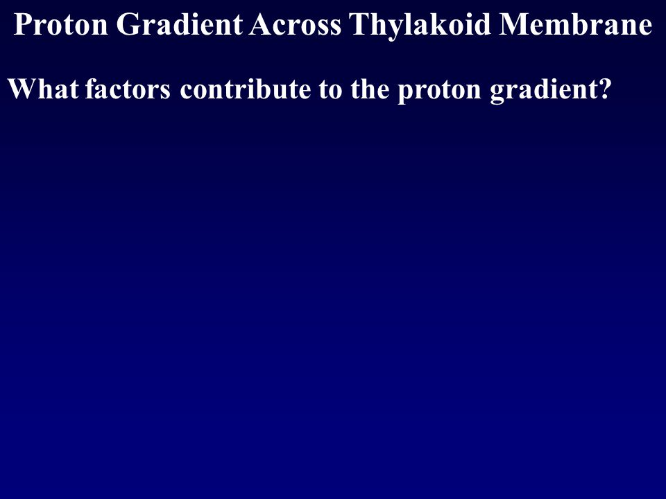 Proton Gradient Across Thylakoid Membrane What factors contribute to the proton gradient