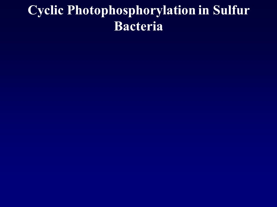 Cyclic Photophosphorylation in Sulfur Bacteria