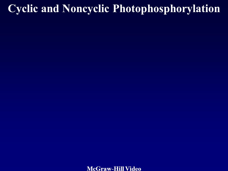 Cyclic and Noncyclic Photophosphorylation McGraw-Hill Video