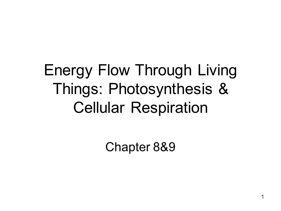 22 Inside a Chloroplast Chloroplast Light H2OH2O O2O2 CO 2 Sugars NADP + ADP + P Calvin Cycle Light- dependent reactions Calvin cycle