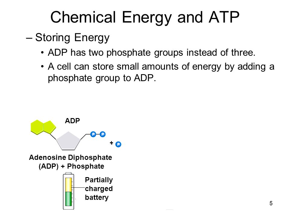 6 Chemical Energy and ATP –Releasing Energy Energy stored in ATP is released by breaking the chemical bond between the second and third phosphates.