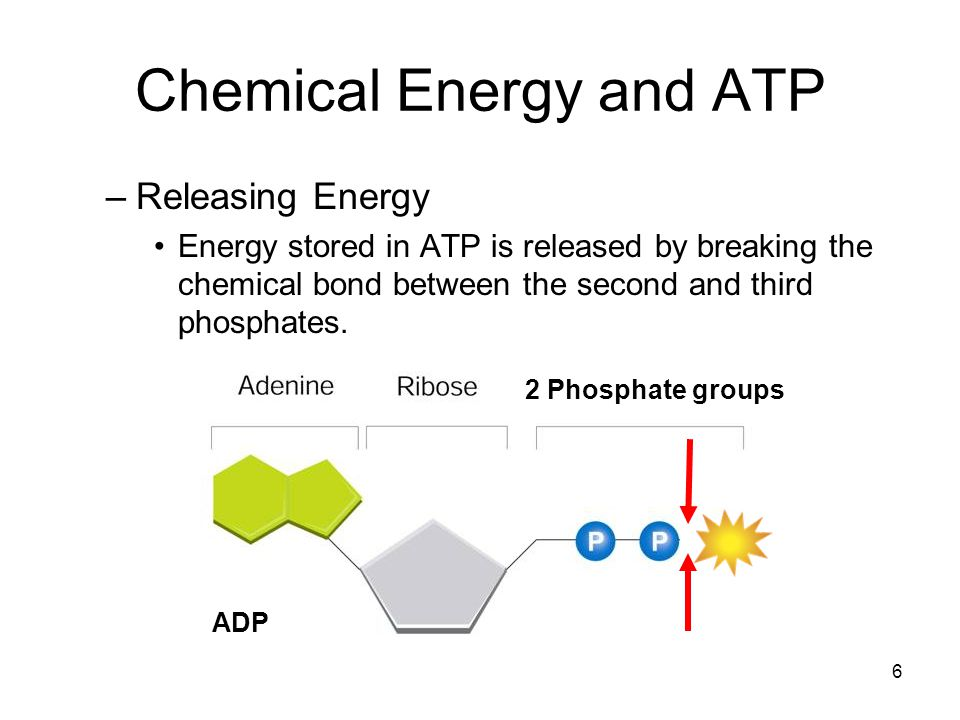 7 ATP energy uses: -cellular activities: active transport, protein synthesis -muscle contraction Most cells have only a small amount of ATP, because it is not a good way to store large amounts of energy.