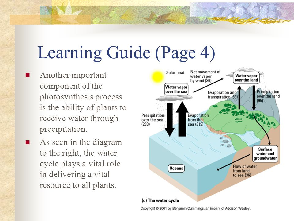 Learning Guide (Page 4) Another important component of the photosynthesis process is the ability of plants to receive water through precipitation. As
