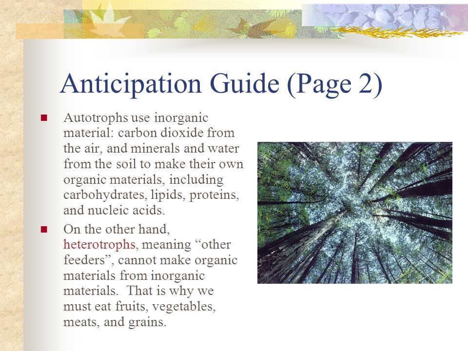 Anticipation Guide (Page 2) Autotrophs use inorganic material: carbon dioxide from the air, and minerals and water from the soil to make their own org