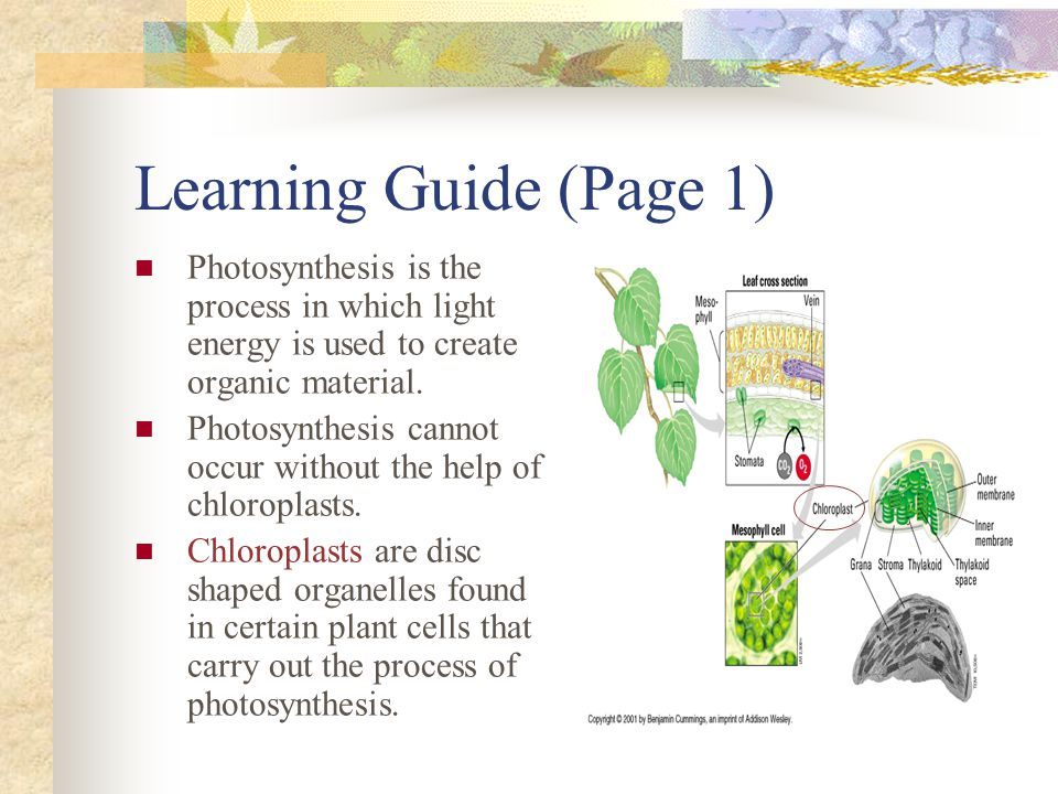 Learning Guide (Page 1) Photosynthesis is the process in which light energy is used to create organic material.