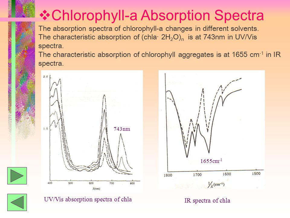  Chlorophyll-a Absorption Spectra The absorption spectra of chlorophyll-a changes in different solvents.