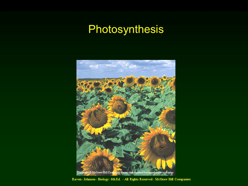 Raven - Johnson - Biology: 6th Ed. - All Rights Reserved - McGraw Hill Companies Photosynthesis Copyright © McGraw-Hill Companies Permission required