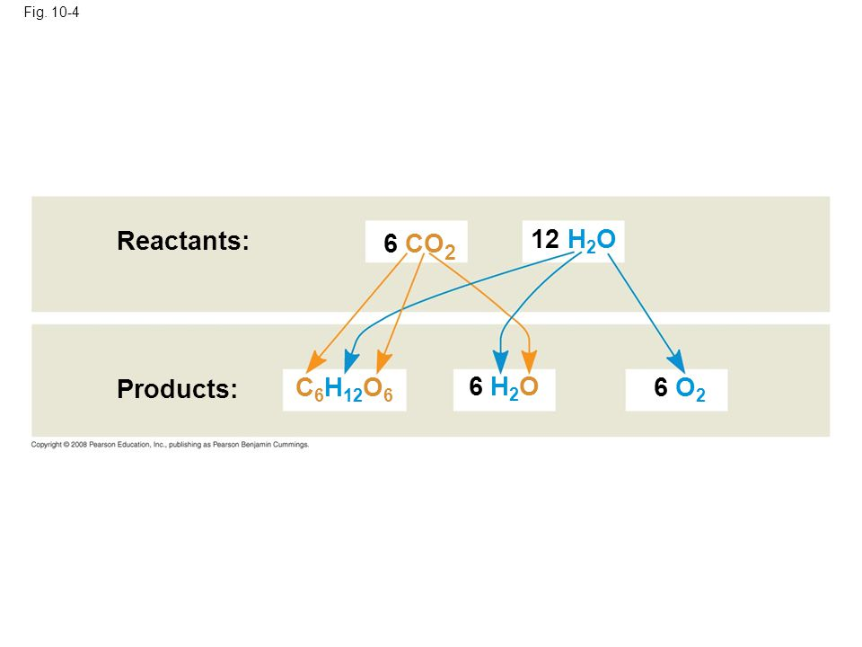 Reactants: Fig. 10-4 6 CO 2 Products: 12 H 2 O 6 O 2 6 H 2 O C 6 H 12 O 6