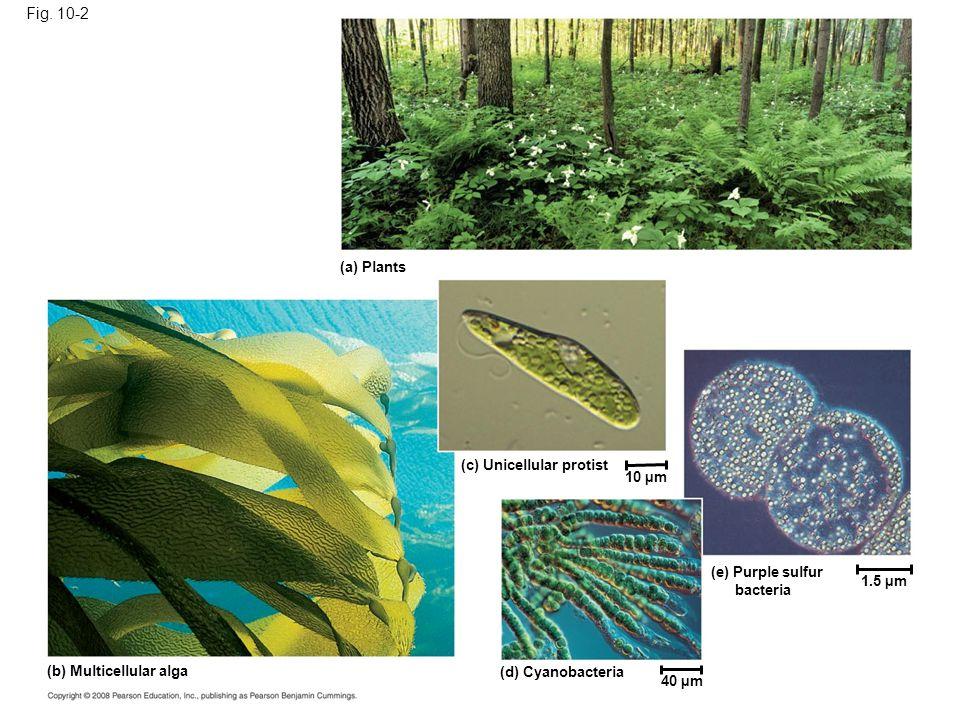 Fig. 10-2a (a) Plants