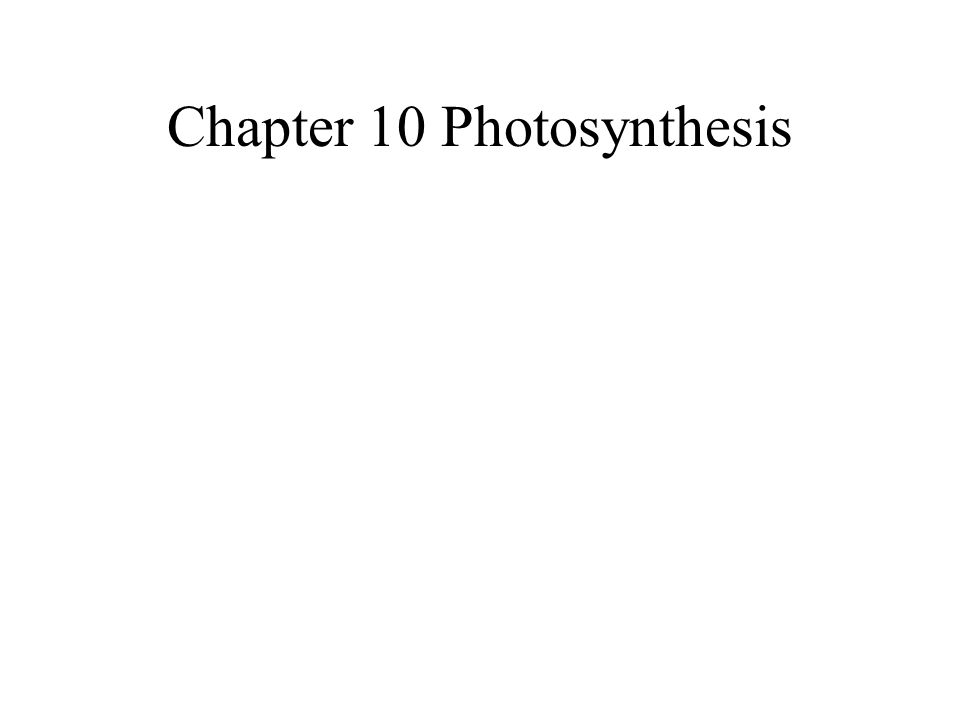 Chapter 10 Photosynthesis