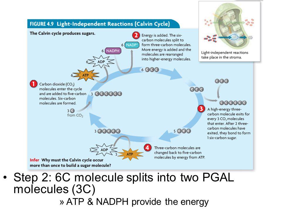CO2CO2 6C molecule CCCCCCCCCCC RuBP CO2 bonds with RuBP Six carbon molecule is created