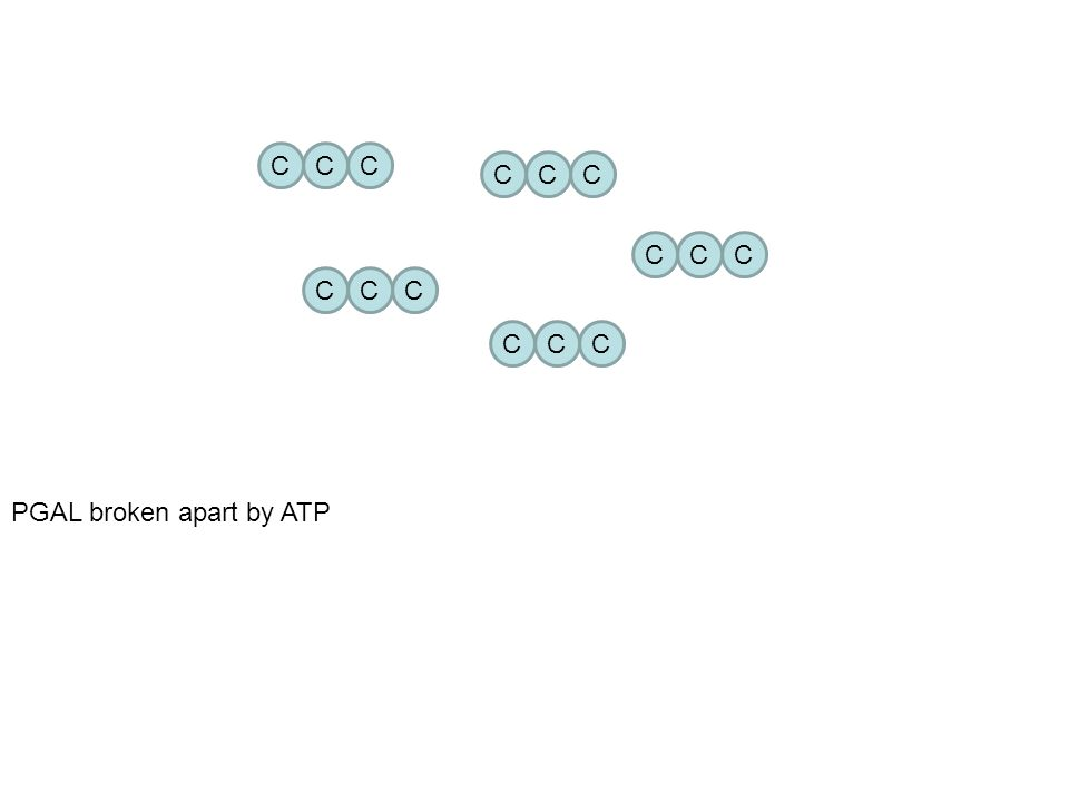 Step 4: PGAL (3C) bonds to remake a RuBP (5C) molecule with help of ATP CO 2 bonds with RuBP (5C) to restart the cycle