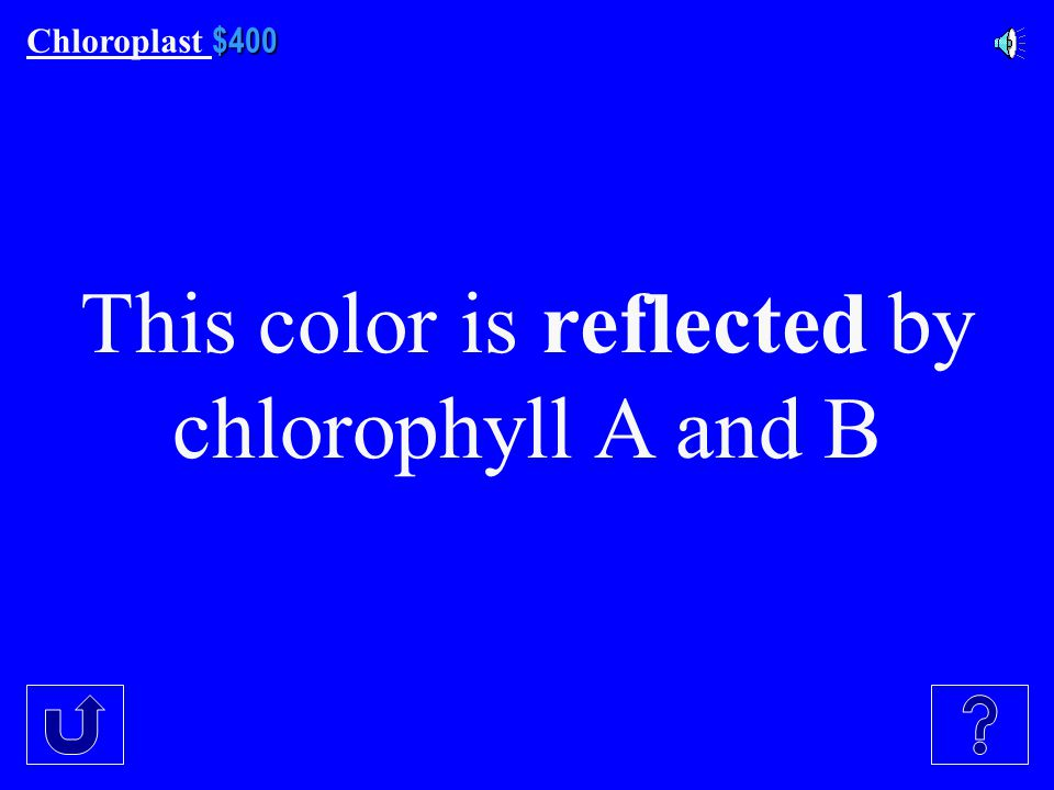 $300 Chloroplast $300 What are the two types of chlorophyll mentioned in our notes