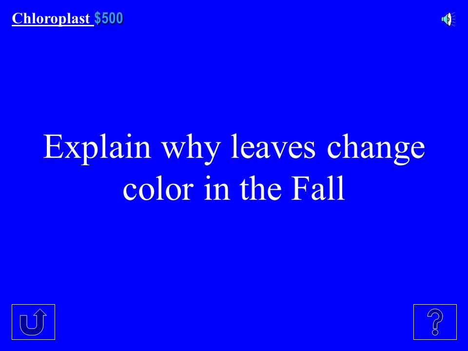 $400 Chloroplast $400 This color is reflected by chlorophyll A and B