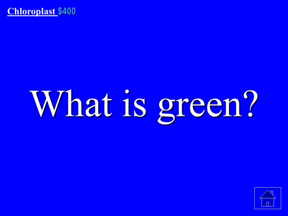 $300 Chloroplast $300 What are Chlorophyll A and Chlorophyll B