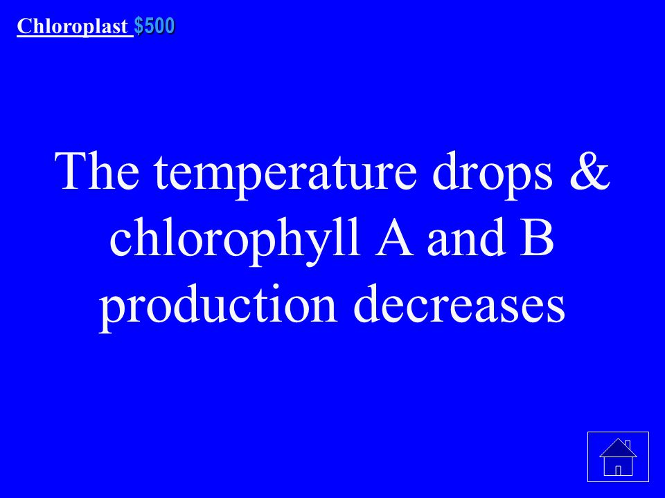 $400 Chloroplast $400 What is green