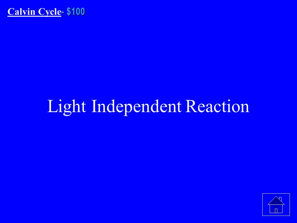 - - $500 Light Dependent Reaction - - $500 What is What is NicotinamideAdenine DinucleotidePhosphate