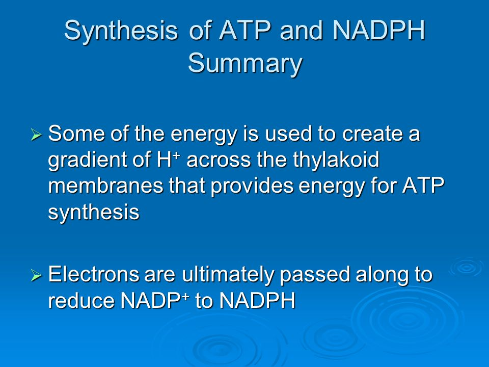 Synthesis of ATP and NADPH Summary  Some of the energy is used to create a gradient of H + across the thylakoid membranes that provides energy for AT