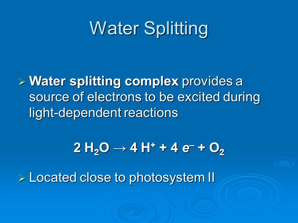 Water Splitting  Water splitting complex provides a source of electrons to be excited during light-dependent reactions 2 H 2 O → 4 H + + 4 e – + O 2