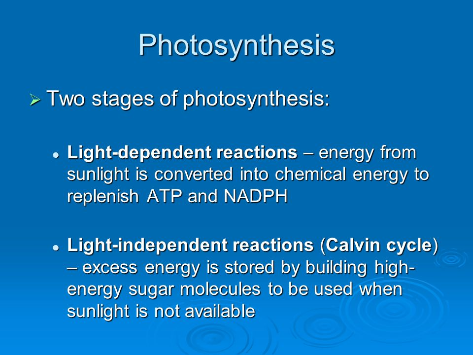 Photosynthesis  Two stages of photosynthesis: Light-dependent reactions – energy from sunlight is converted into chemical energy to replenish ATP and