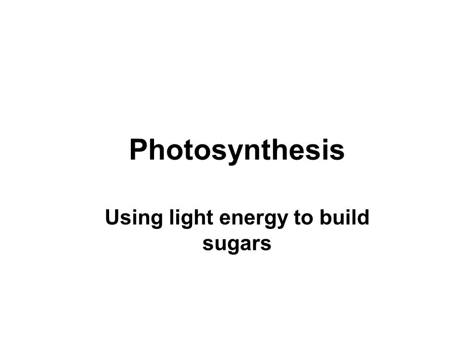 Photosynthesis Using light energy to build sugars