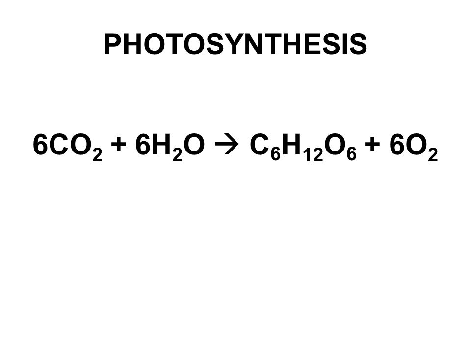 PHOTOSYNTHESIS 6CO 2 + 6H 2 O  C 6 H 12 O 6 + 6O 2