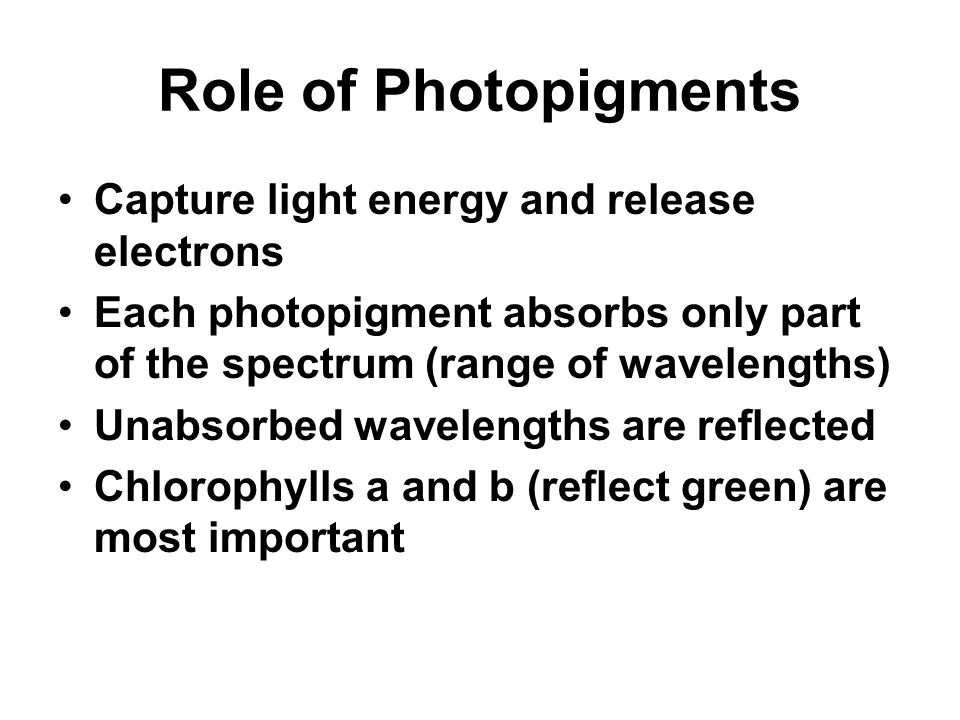 Role of Photopigments Capture light energy and release electrons Each photopigment absorbs only part of the spectrum (range of wavelengths) Unabsorbed wavelengths are reflected Chlorophylls a and b (reflect green) are most important