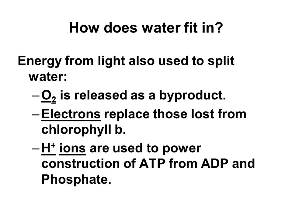 How does water fit in. Energy from light also used to split water: –O 2 is released as a byproduct.