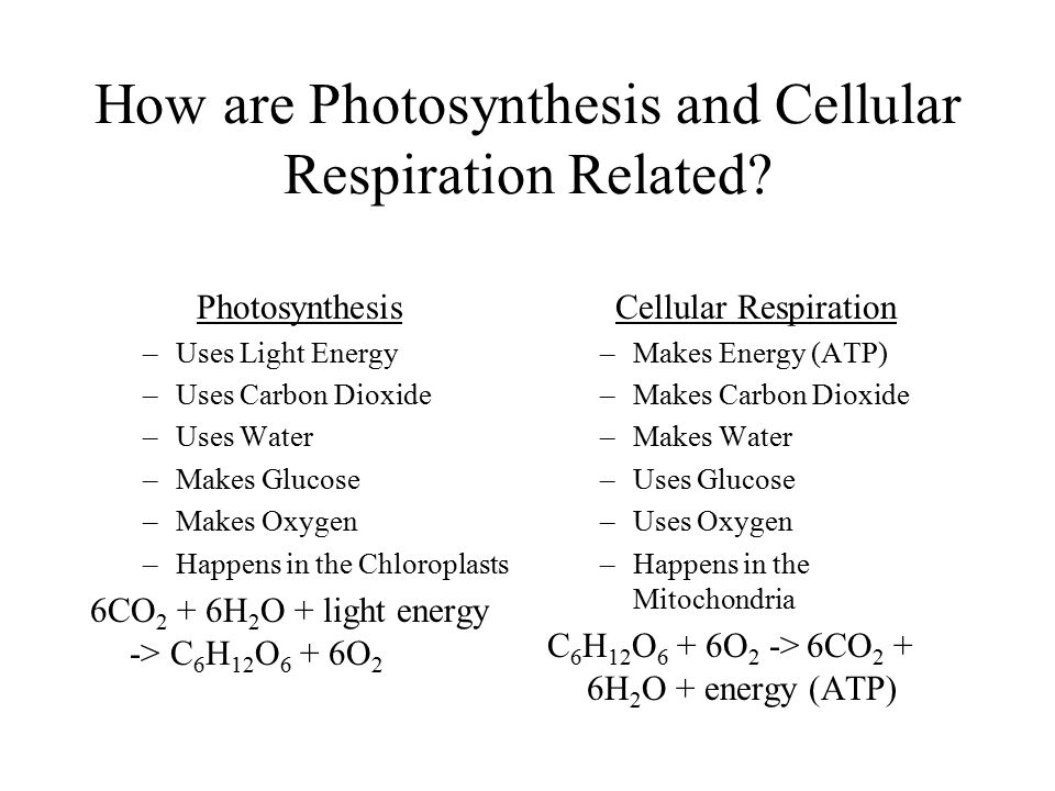 How are Photosynthesis and Cellular Respiration Related? Photosynthesis –Uses Light Energy –Uses Carbon Dioxide –Uses Water –Makes Glucose –Makes Oxyg