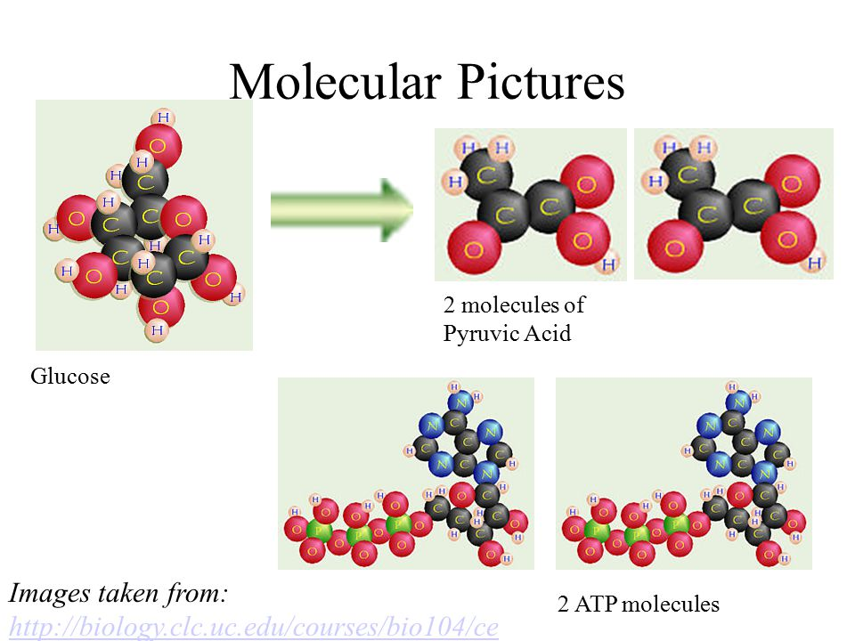 Molecular Pictures Glucose 2 molecules of Pyruvic Acid Images taken from: http://biology.clc.uc.edu/courses/bio104/ce llresp.htm http://biology.clc.uc