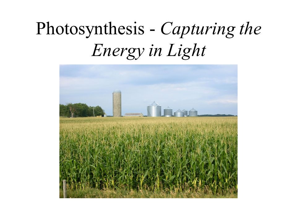 Photosynthesis - Capturing the Energy in Light