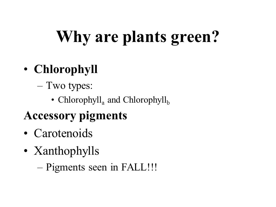 Why are plants green? Chlorophyll –Two types: Chlorophyll a and Chlorophyll b Accessory pigments Carotenoids Xanthophylls –Pigments seen in FALL!!!